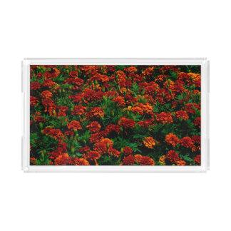 Paisagem da flor do vermelho alaranjado