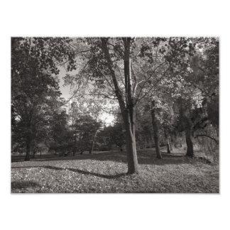 Paisagem do outono, parque do Bute, Cardiff Impressão De Foto