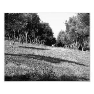Paisagem preto e branco 1 foto arte