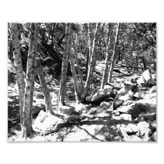 Paisagem preto e branco 22 foto
