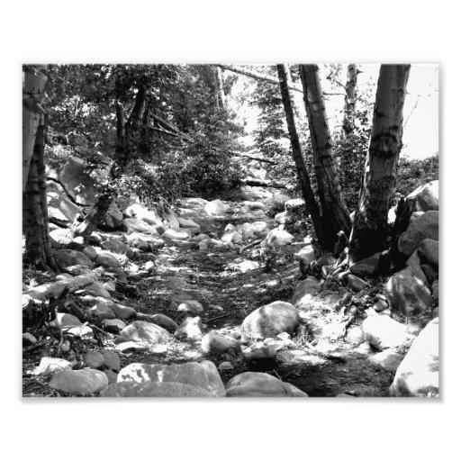Paisagem preto e branco 24 impressão fotográficas