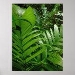 Palmas da floresta tropical posteres