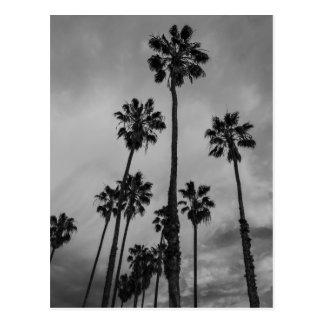 Palmas de B&W Los Angeles Cartão Postal