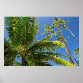 Palmas de coco, Pu'uhonua o Honaunau 1 Poster
