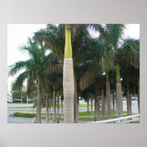 Palmas de Miami Posteres