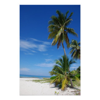 Palmeira, Grande Caimão, impressão das canvas