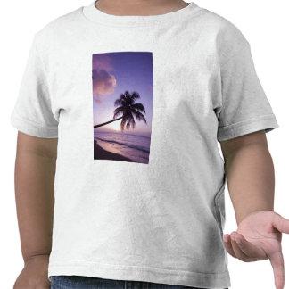 Palmeira solitária no por do sol, praia do bosque t-shirt