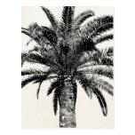 Palmeira tropical retro da ilha em preto e branco cartoes postais
