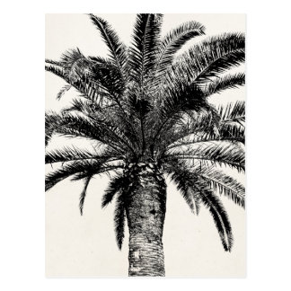 Palmeira tropical retro da ilha em preto e branco cartão postal