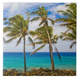 Palmeiras do coco (nucifera dos Cocos) que