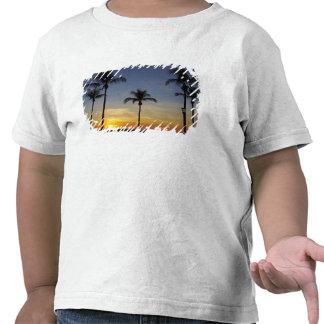 Palmeiras e por do sol, praia de Mindil Camisetas