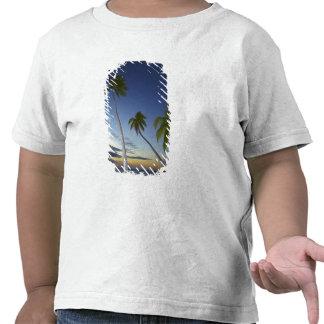 Palmeiras e por do sol, resort da ilha da camisetas