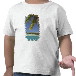 Palmeiras & lagoa, resort da ilha da angra do camiseta