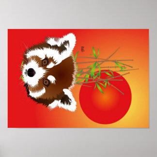 Panda pequena poster (Ailurus fulgens)
