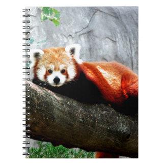 panda vermelha animal engraçada bonito cadernos