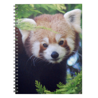 Panda vermelha cadernos espiral