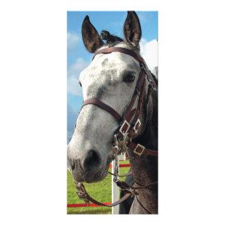 Panfleto Cavalo puro da raça