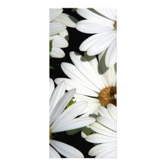 Panfleto Flores da margarida branca