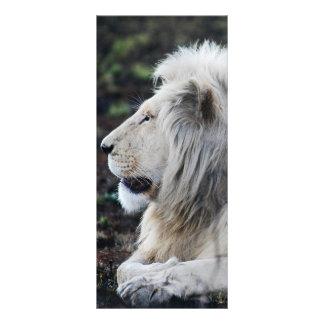 Panfleto Foto branca africana do perfil do leão
