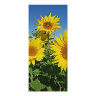 Panfleto girassol na flor colorida do verão do céu azul