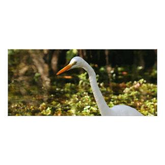 Panfleto Grande Egret que vadeia nos marismas