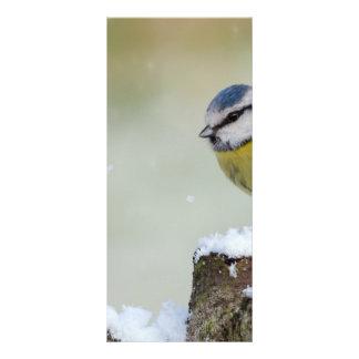 Panfleto Pássaro selvagem impressionante do melharuco azul