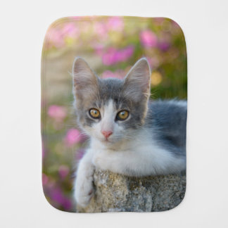 Paninho De Boca O rosa bicolor novo bonito do gatinho do gato