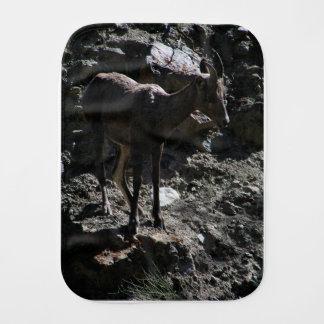 Pano De Boca Carneiros de Bighorn da montanha rochosa, ovelha