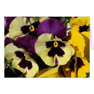 Pansies do primavera cartão