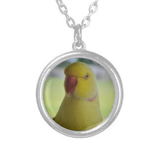 Papagaio amarelo ensolarado de Ringneck do indiano Colar