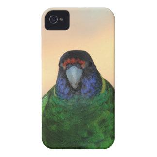papagaio capinhas iPhone 4