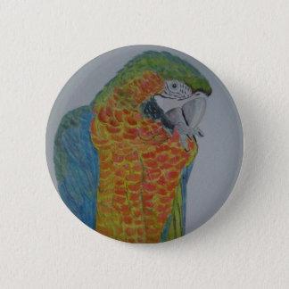 papagaio do Macaw do オウムパロット que mastiga a pé Bóton Redondo 5.08cm