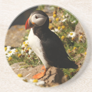 Papagaio-do-mar atlântico porta copos de arenito