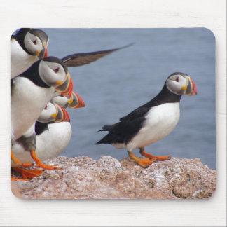 Papagaio-do-mar bonitos Mousepad