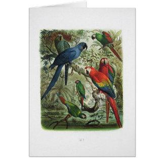 papagaio, vintage, coleção de impressão, 1848 cartão comemorativo