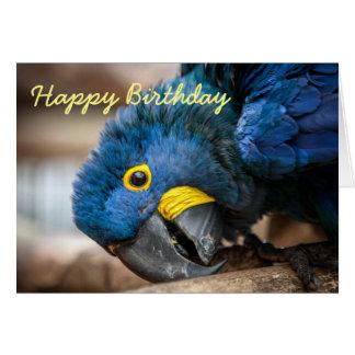 Papagaios do Macaw do jacinto do cartão de