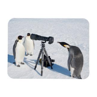 Paparazzi do pinguim ímã