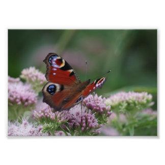 Papel da foto da borboleta de pavão