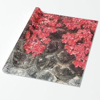 Papel De Presente A hera rosa vermelha sae outono da parede de pedra