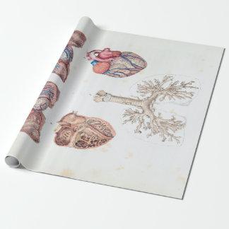 Papel De Presente Anatomia do vintage do coração e dos pulmões