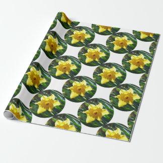 Papel De Presente Daffodil amarelo 02.2_rd