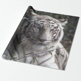 Papel De Presente Fim-acima branco do tigre