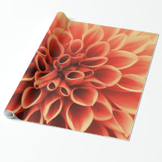 Papel De Presente Flor alaranjada bonita da dália