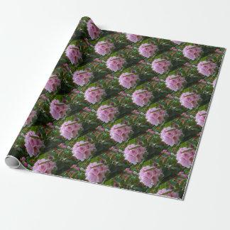Papel De Presente flores cor-de-rosa com orvalho