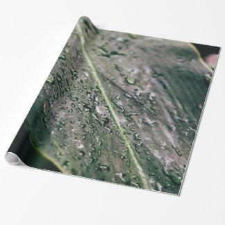Papel De Presente Folha verde com gotas da água, Botanics molhado