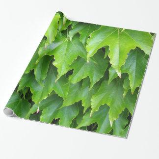 Papel De Presente Folhas verdes brilhantes da hera