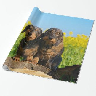 Papel De Presente Foto bonito do animal de estimação de dois amigos