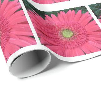 Papel De Presente Fotografia cor-de-rosa da margarida do Gerbera