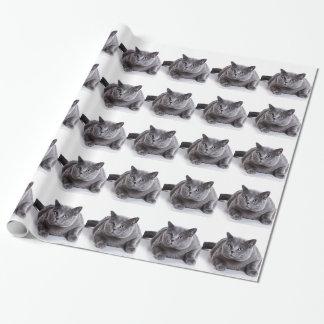 Papel De Presente Gato cinzento