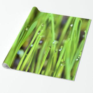 Papel De Presente Grama molhada com papel de envolvimento dos pingos